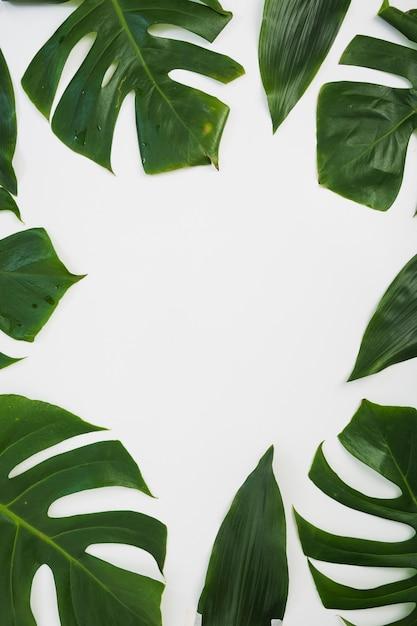 Grens die met monsterabladeren wordt gemaakt op witte achtergrond Gratis Foto