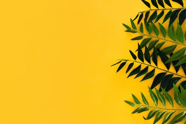 Grens groene bladeren op geel met copyspace Gratis Foto