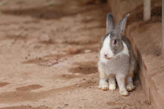 Grijs konijn zittend op de grond in de achtertuin. Premium Foto