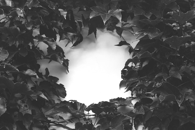 Grijsschaal hoge hoek shot van bladeren rond een wit oppervlak Gratis Foto