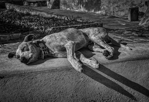 Grijsschaal shot van een moe dakloze schattige hond slapen op straat in de middag Gratis Foto