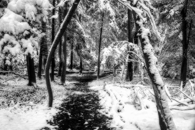Grijstinten geschoten op een pad in het midden van bomen bedekt met sneeuw Gratis Foto