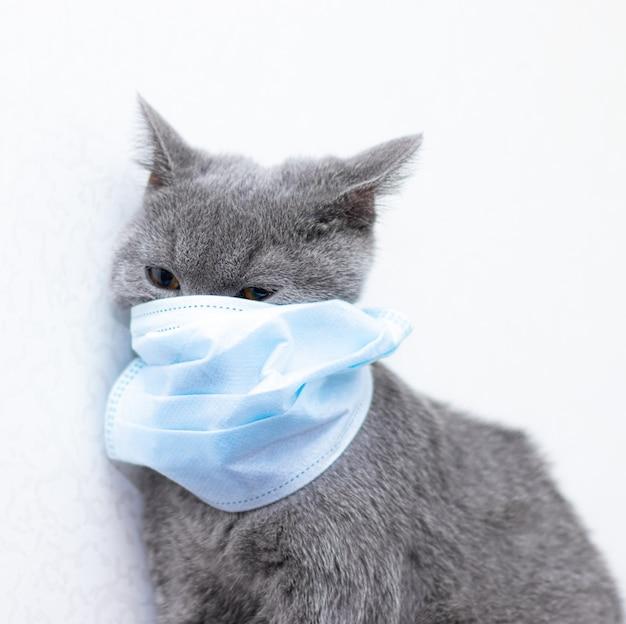 Grijze kat in een medisch masker. diergezondheid. coronavirus. coronavirusziekte bij katten en dieren. ademhalingsbescherming. geen coronavirus. Premium Foto
