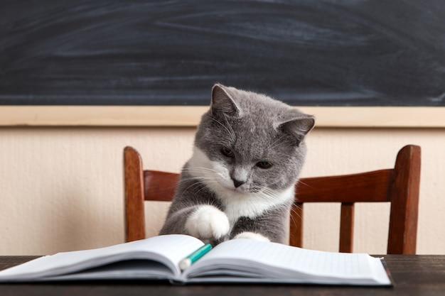 Grijze kat zit aan een tafel met boeken en notebooks, thuis studeren. Premium Foto