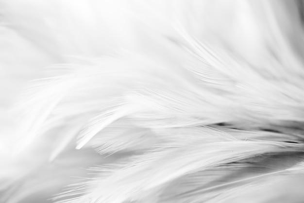 Grijze kippenveren in zachte en onscherpe stijl voor de achtergrond, zwart en wit Premium Foto