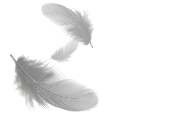 Grijze veren zweven in de lucht, geïsoleerd op een witte achtergrond. Premium Foto