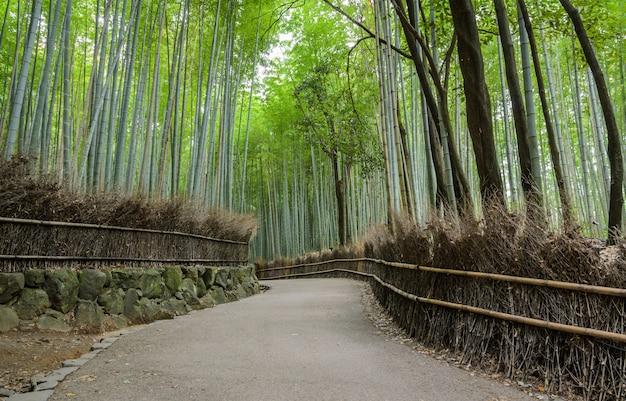 Groen bamboebosje in arashiyama in kyoto, japan Premium Foto