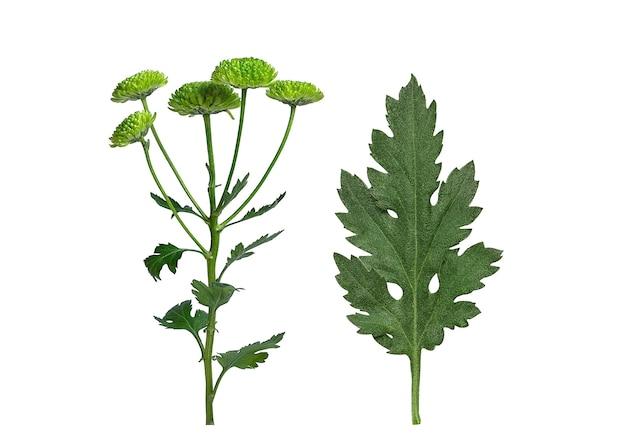 Groen blad en chrysantenbloemen Premium Foto