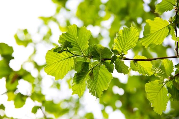 Groen blad met waterdruppel op zwarte achtergrond Gratis Foto