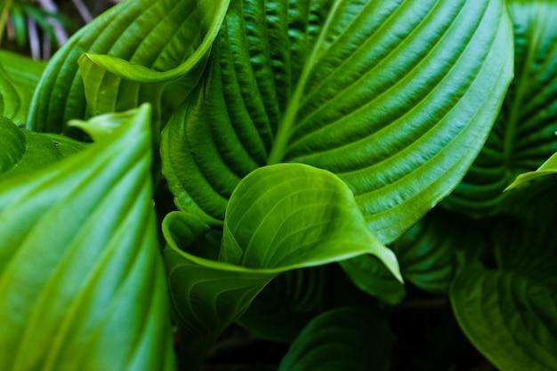 Groen blad met waterdruppels voor Premium Foto
