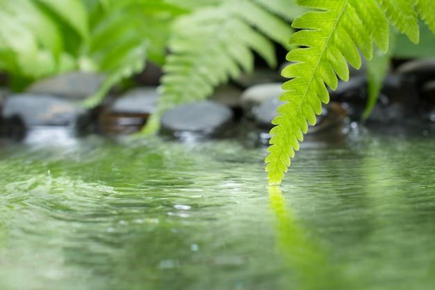 Groen blad van plant met varen en kiezelsteen op water Premium Foto