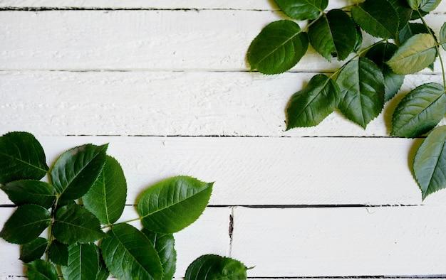 Groen bladerenkader op witte houten. kopie ruimte Premium Foto
