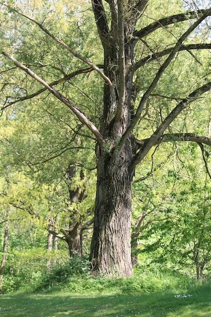 Groen bos met hoge bomen overdag Gratis Foto