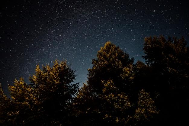 Groen bosgebladerte in een sterrige nacht Gratis Foto