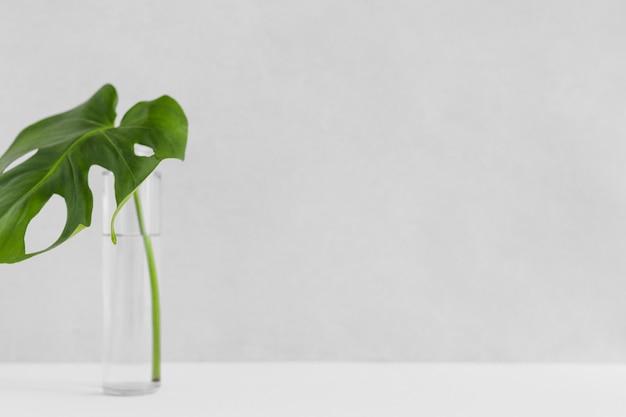 Groen enig monsterablad in glasfles tegen witte achtergrond Gratis Foto