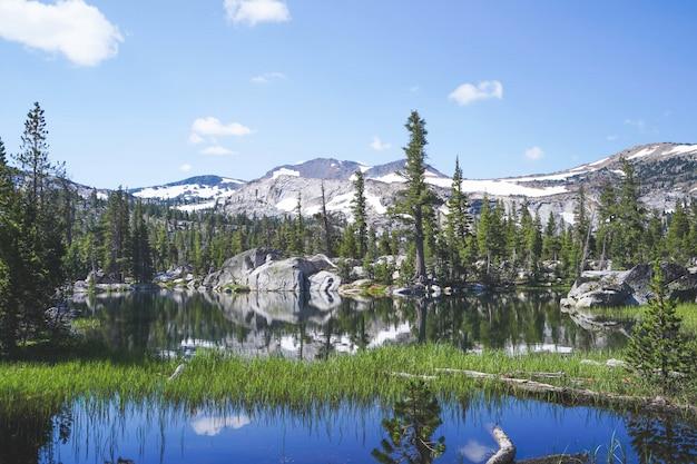 Groen gras groeit in water met bomen en bergen in de buurt van lake tahoe, ca Gratis Foto