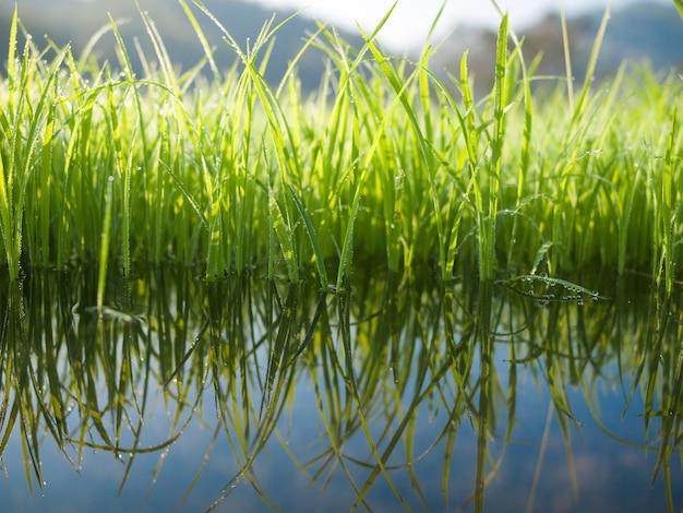 Groen gras met waterreflex Premium Foto