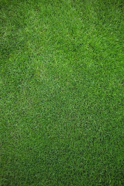 Groen gras veld achtergrond Gratis Foto