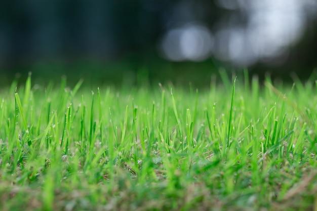 Groen gras Premium Foto