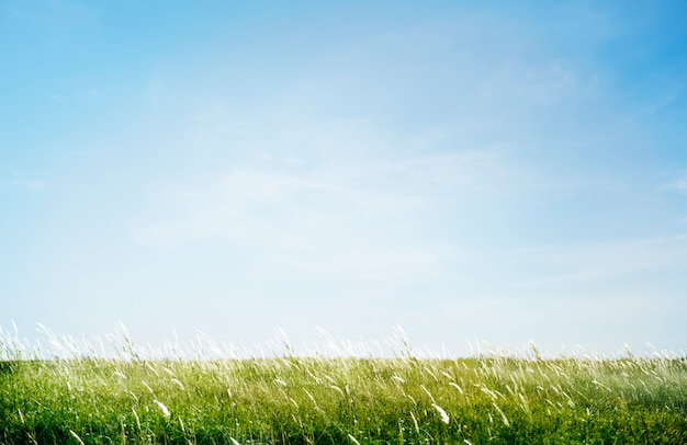 Groen grasrijk parkgebied in openlucht concept Gratis Foto