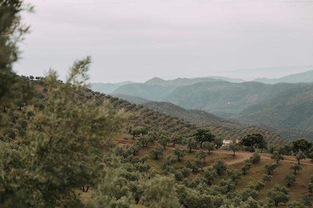 Groen landschap met veel groene bomen en bergen onder de onweerswolken Gratis Foto