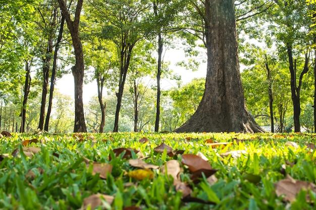 Groen moeraspark bij ochtendzonlicht met grote bomen openlucht bij lumphini-park, bangkok Premium Foto