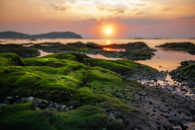 Groen mos op het rif Premium Foto
