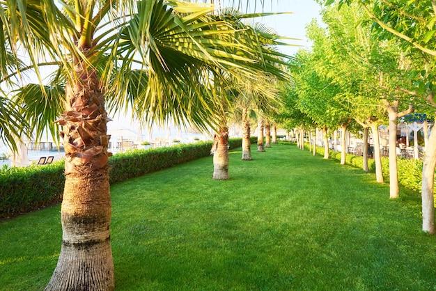 Groen palmpark en hun schaduwen op het gras. Gratis Foto
