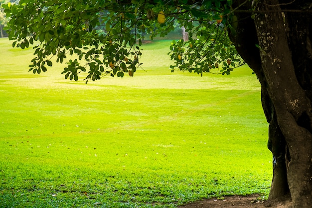 Groen stadspark met bomen. natuur achtergrond Premium Foto