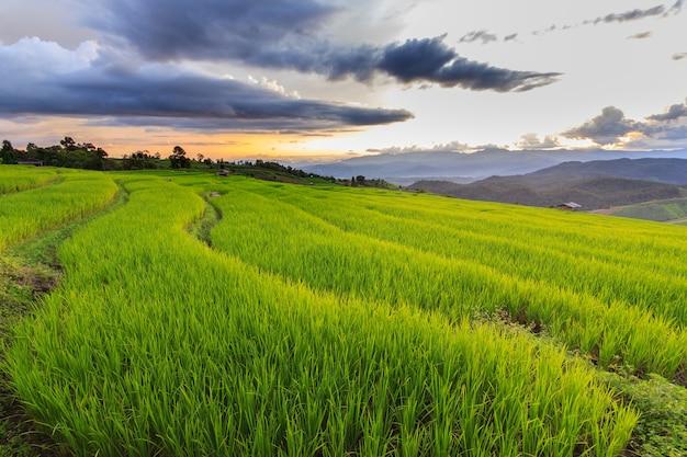Groen terrasvormig padieveld in pa pong pieng, mae chaem, chiang mai, thailand Premium Foto