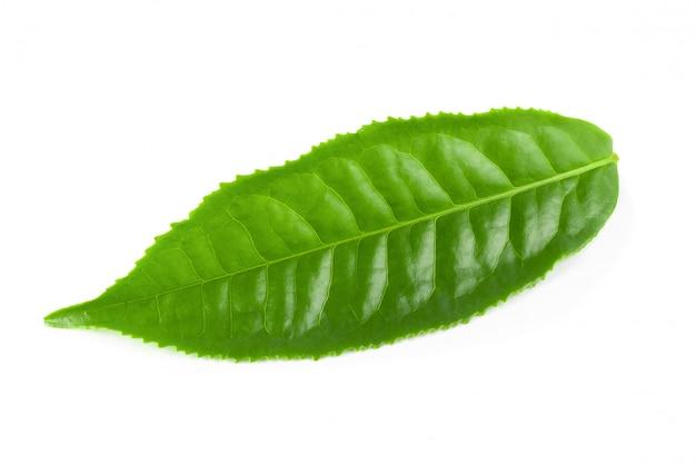 Groen theeblaadje dat over witte achtergrond wordt geïsoleerd Premium Foto