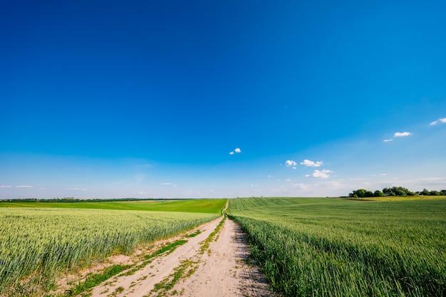 Groen veld, blauwe lucht en zon. Premium Foto