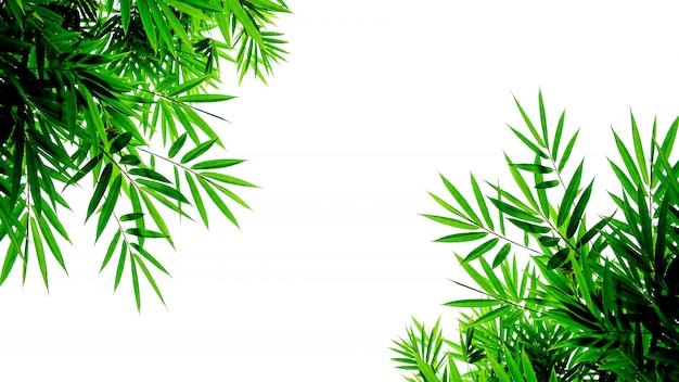 Groene bamboebladeren die op witte achtergrond worden geïsoleerd Premium Foto