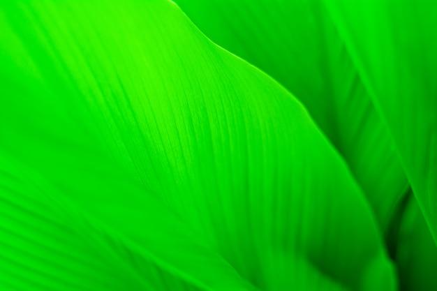 Groene blad textuur achtergrond. Premium Foto