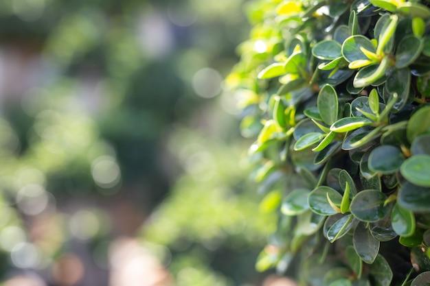 Groene bladachtergrond. Gratis Foto