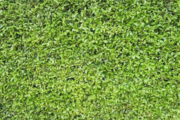 Groene bladachtergrond. Premium Foto