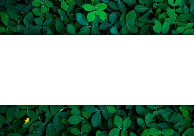 Groene bladeren achtergrond in donker licht eco concept afbeelding of verfrissing concept achtergrond, originele afmetingen 5472 x 3648 pixels Premium Foto