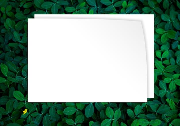 Groene bladeren achtergrond in donker licht eco concept afbeelding of verfrissing concept achtergrond Premium Foto