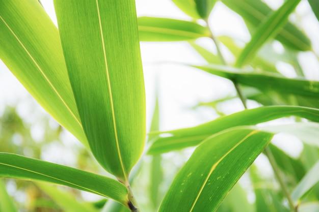 Groene bladeren naar de hemel. Premium Foto
