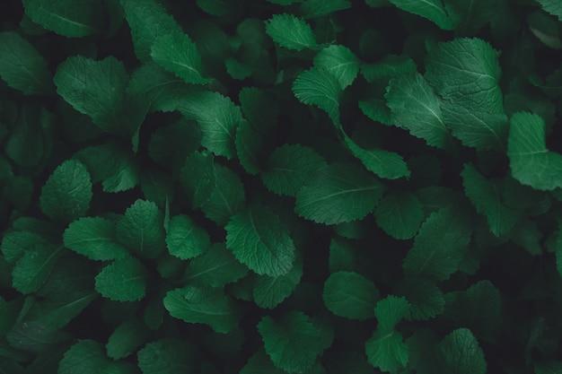 Groene bladeren patroon achtergrond. plat leggen. natuur donkergroene toon achtergrond Premium Foto