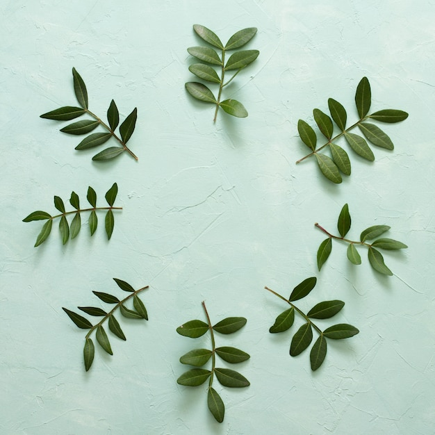 Groene bladeren takje gerangschikt in cirkelvormig frame op pastel groen oppervlak Gratis Foto