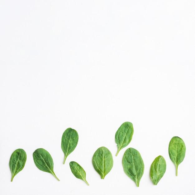 Groene bladeren van spinazie Premium Foto