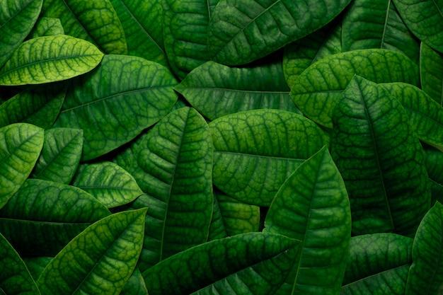 Groene bladeren Premium Foto