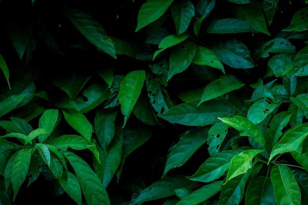 Groene bladerenachtergrond in de donkere lichte illustratie van het ecoconcept of de achtergrond van het verfrissingconcept Premium Foto