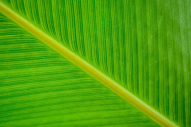 Groene bladpatronen - close-up Premium Foto