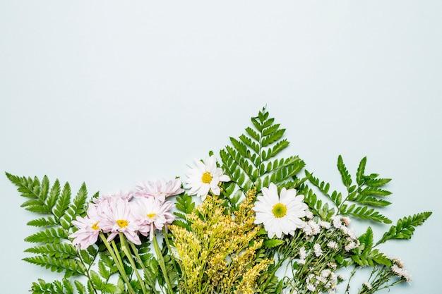 Groene bloemensamenstelling op lichtblauwe achtergrond Gratis Foto