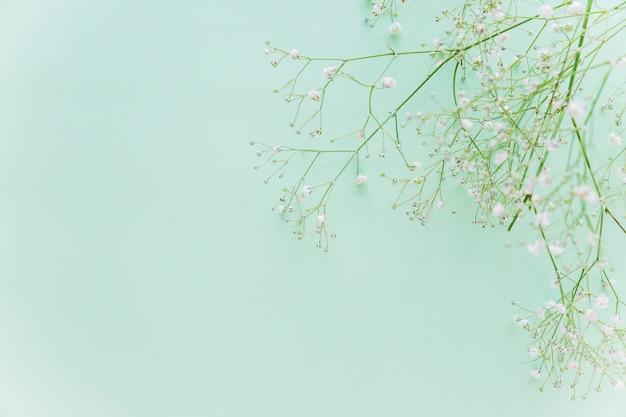 Groene bloementakken op lijst Gratis Foto