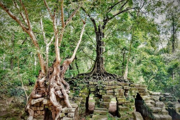 Groene bomen en de ruïnes van het historische oriëntatiepunt van angkor thom in kambodja Gratis Foto