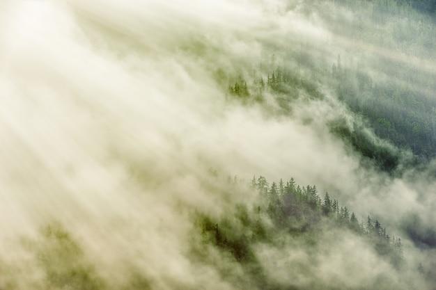 Groene bomen onder witte wolken Gratis Foto