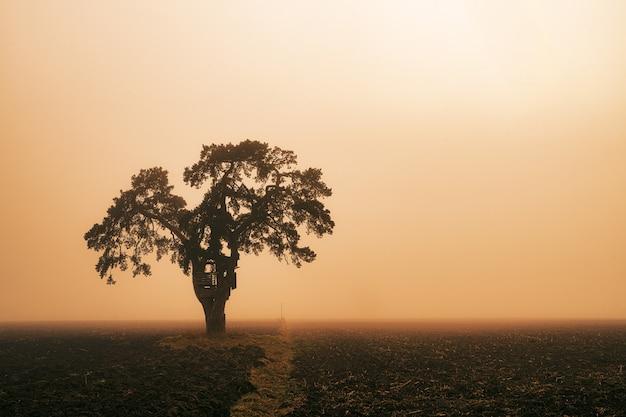 Groene boom op het veld tijdens zonsondergang Gratis Foto